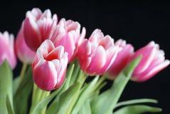 Rosafarbene Tulpen auf schwarzem Hintergrund Stockfotografie