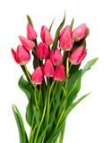 Rosafarbene Tulpen auf weißem Hintergrund Stockfotografie