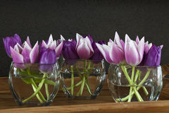 Rosafarbene Tulpen in einem Vase lizenzfreies stockbild