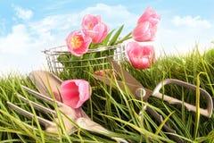 Rosafarbene Tulpen im hohen Gras Stockfotografie