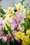 Rosafarbene und gelbe Orchideen Stockbild