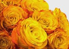 Rosafarbene und gelbe Rosen Stockfotografie