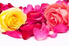 Rosafarbene und gelbe Rosen und Blumenblätter Lizenzfreie Stockfotografie