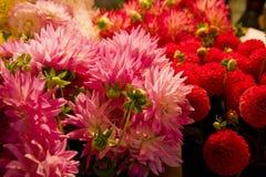 Rosafarbene und rote Blumen Stockbilder