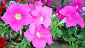 Rosafarbene und rote Blumen Stockfotos