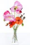 Rosafarbene und rote Mohnblumen Stockfotografie