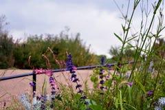 Rosafarbene und violette Blumen Lizenzfreie Stockfotos