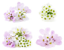 Rosafarbene und weiße Blumen Stockbild