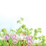Rosafarbene und weiße Frühlingsblumen lizenzfreie stockfotografie
