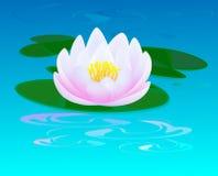 Rosafarbene Wasserlilie Stockfotografie