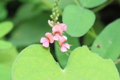 Rosafarbene wilde Blume Lizenzfreies Stockfoto
