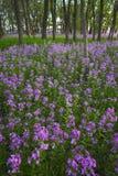 Rosafarbene wilde Blumen und Wald stockfotografie