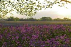 Rosafarbene wilde Blumen und Wald lizenzfreie stockfotos