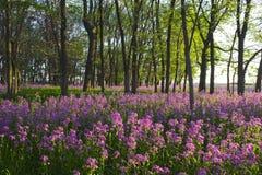 Rosafarbene wilde Blumen und Wald Lizenzfreies Stockfoto