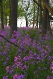 Rosafarbene wilde Blumen und Wald stockbilder