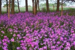 Rosafarbene wilde Blumen und Wald lizenzfreie stockbilder