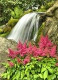 Rosafarbener Astilbe und Wasserfall Stockfotos