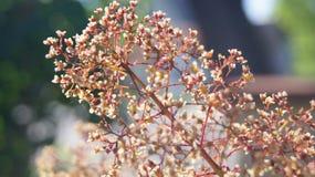 Rosafarbener Baum Stockfotografie