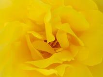 Rosafarbener Beschaffenheitsabschluß des gelben Hintergrundes oben Lizenzfreie Stockbilder