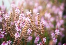 Rosafarbener Blumenfrühling Lizenzfreie Stockfotos