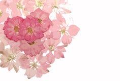 Rosafarbener Blumenhintergrund Lizenzfreies Stockfoto