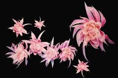 Rosafarbener Blumenhintergrund Stockfoto