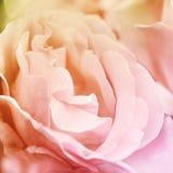 Rosafarbener Blumenhintergrund der Zusammenfassung Blumen gemacht mit Farbfiltern Stockbilder