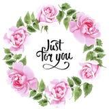 Rosafarbener Blumenkranz des Wildflowertees in einer Aquarellart Lizenzfreie Stockbilder