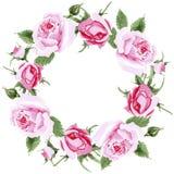 Rosafarbener Blumenkranz des Wildflowertees in einer Aquarellart Lizenzfreies Stockfoto