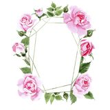 Rosafarbener Blumenkranz des Wildflowertees in einer Aquarellart Lizenzfreie Stockfotografie