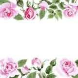Rosafarbener Blumenrahmen des Wildflowertees in einer Aquarellart Stockbilder