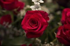 rosafarbener Blumenstrauß Stockbilder