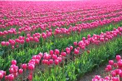 Rosafarbener Blumenstrauß von Sping Stockfoto