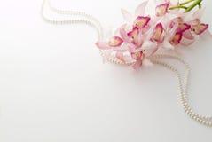 Rosafarbener Cymbidium und Perle Lizenzfreies Stockfoto