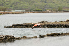 Rosafarbener Flamingopark Lizenzfreie Stockfotografie
