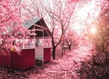 Rosafarbener Frühling (Infrarotfoto) Stockbilder