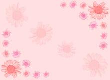 Rosafarbener Gänseblümchenhintergrund. Vektor Abbildung