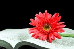 Rosafarbener Gerbera auf dem geöffneten Buch lizenzfreie stockfotografie