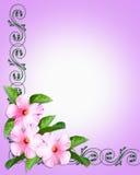 Rosafarbener Hibiscusrand Lizenzfreies Stockbild