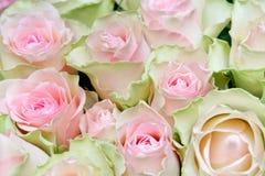 Rosafarbener Hintergrund der Blume Stockbild