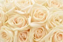 Rosafarbener Hintergrund des schönen Weiß Stockbild