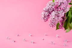 Rosafarbener Hintergrund mit lila Blumen Gruß-Karte, Einladungs-Karte Lizenzfreie Stockfotografie