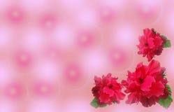 Rosafarbener Hintergrund mit roten Blumen Stockbilder
