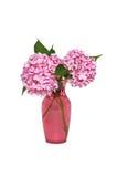 Rosafarbener Hydrangea Lizenzfreie Stockfotos