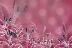 Rosafarbener mit Blumenhintergrund Lilienblumen auf einem unscharfen bokeh Hintergrund Tulpen und Winde auf einem weißen Hintergr Stockbilder