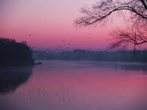 Rosafarbener Morgen Stockbilder