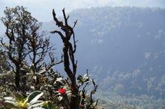 Rosafarbener Mountain View Intanon in Chiang Mai Lizenzfreies Stockfoto