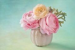 Rosafarbener Ranunculus Stockbild