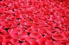 Rosafarbener Rosen-Blumenblatt-Hintergrund Lizenzfreie Stockfotos