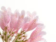 Rosafarbener Schönheitsbusch lizenzfreie stockfotografie